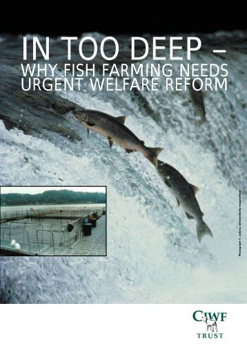 why fish farming needs urgent welfare reform - Compassion in World ...