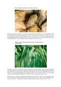 THE SPECIES COMPOSITION AND NUMBER OF APHIDS ON THE ... - Page 5