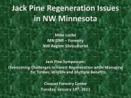 Jack Pine Regeneration Issues in NW MN