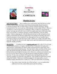 CAMELLIA - Gloucester County Virginia