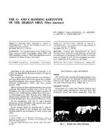 THE G- AND C-BANDING KARYOTYPE OF THE ... - Nwrc.gov.sa