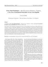 Citrus Flatid Planthopper – Metcalfa pruinosa