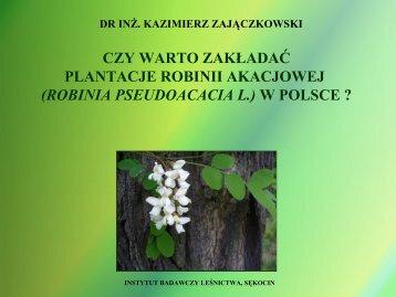 Uprawa plantacyjna robinii - Stary serwis Wydziału Leśnego SGGW
