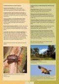 28876/LIFE_Palienes_parskats.pdf - Latvijas Dabas fonds - Page 5