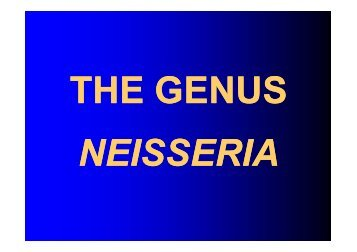 THE GENUS Neisseria - LF