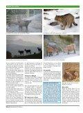 Download - Historische Verkehrsschau Altenrhein - Seite 2