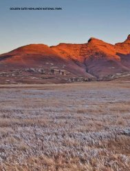 GOLDEN GATE HIGHLANDS NATIONAL PARK - Year in the Wild