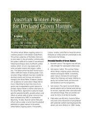 Austrian Winter Peas for Dryland Green Manure