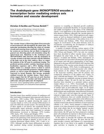 The Arabidopsis gene MONOPTEROS encodes a transcription ...