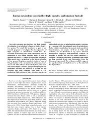Energy metabolism in orchid bee flight muscles - The Journal of ...