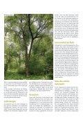 Wildapfel - Schutzgemeinschaft Deutscher Wald - Page 3