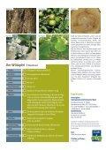 Wildapfel - Schutzgemeinschaft Deutscher Wald - Page 4
