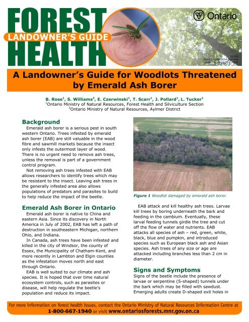 A Landowner's Guide for Woodlots Threatened by Emerald Ash Borer