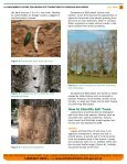 A Landowner's Guide for Woodlots Threatened by Emerald Ash Borer - Page 2