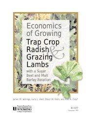 Economics of Growing Trap Crop Radish Grazing Lambs