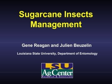 Sugarcane Insects Management - Louisiana Agricultural ...