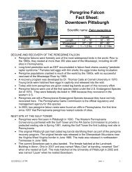 Peregrine Falcon Fact Sheet: Downtown Pittsburgh - WQED