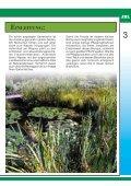 nature concept pond nature concept pond - Seite 3