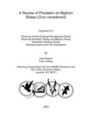 A Review of Predation on Bighorn Sheep (Ovis ... - WEST, Inc.