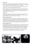Family, Friend and Carer - A Guide - Macular Degeneration ... - Page 5