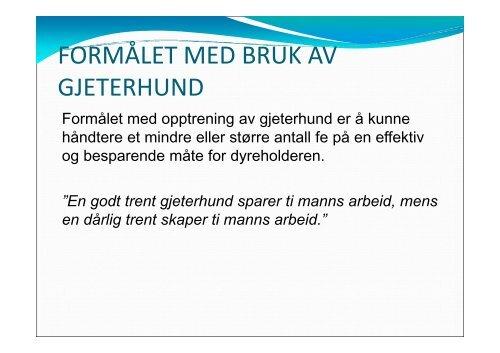 Grunnkurs gjeterhund - Norsk Sau og Geit