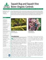 Squash Bug and Squash Vine Borer - Organic Farming Exchange