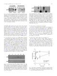 Activation of a putative MAP kinase in pollen is stimulated by the self ... - Page 3