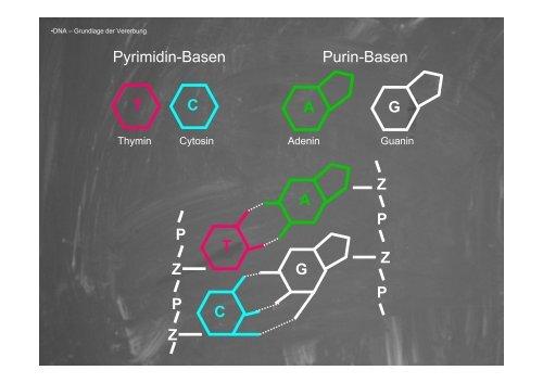Molekulare Evolution & Phylogenierekonstruktion - Goethe-Universität