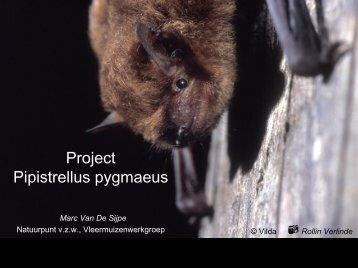 Project Pipistrellus pygmaeus - Natagora