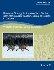 Recovery Strategy for the Woodland Caribou - Forest Stewardship ...