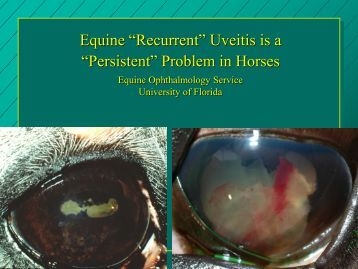 Equine ERU - University of Florida