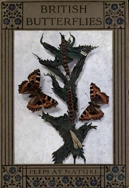 BUTTERFLIES - Yesterday Image