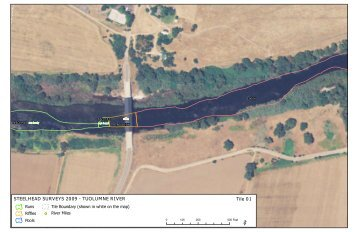 2009 Tuolumne River Steelhead Surveys RM 30 to RM 40
