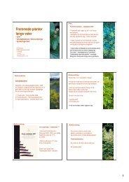 Fremstad Fagdag 24.4.08.pdf - FAGUS