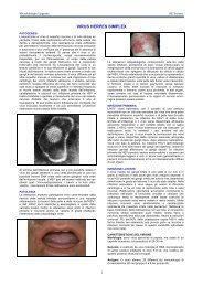 Herpes Simplex Virus (HSV) - Sezione di Microbiologia