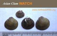 Asian Clam WATCH - Northeast Aquatic Nuisance Species Panel