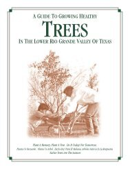 Rio Grande Valley Tree Guide - Willacy