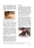 ein Steckbrief - Fledermaus BE - Page 2
