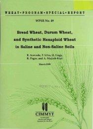 Bread Wheat, Durum Wheat, and Synthetic Hexaploid ... - Cimmyt