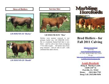 Bred Heifers - for Fall 2011 Calving - Breeding Cattle Page