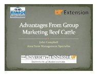 Advantages from Group Marketing Beef Cattle - UT Extension