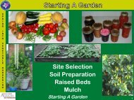 Site selection, soil preparation and raised bed construction.