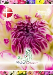 Dalina Genetics® - Young Flowers A/S