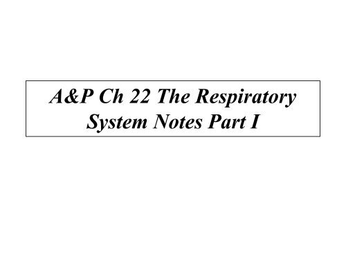 A&P Ch 22 The Respiratory System Notes Part I