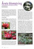 Lapprosen nr 3 2012 - Den norske Rhododendronforening - Page 4