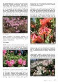 Lapprosen nr 3 2012 - Den norske Rhododendronforening - Page 5