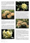 Lapprosen nr 3 2012 - Den norske Rhododendronforening - Page 6