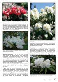Lapprosen nr 3 2012 - Den norske Rhododendronforening - Page 7