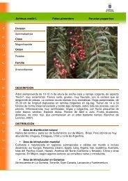 Schinus molle L Falso pimentero - Interreg Bionatura