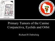 Primary Tumors of the Canine Conjunctiva, Eyelids, and Orbits